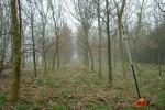 Woodland pruning